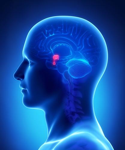 amely az agyalapi mirigy rákja