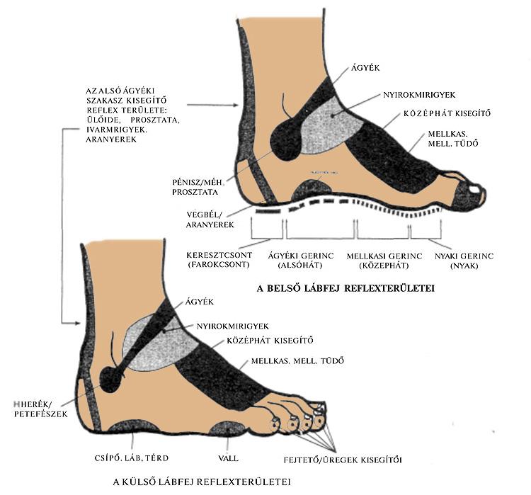fáj a láb talpának ízülete